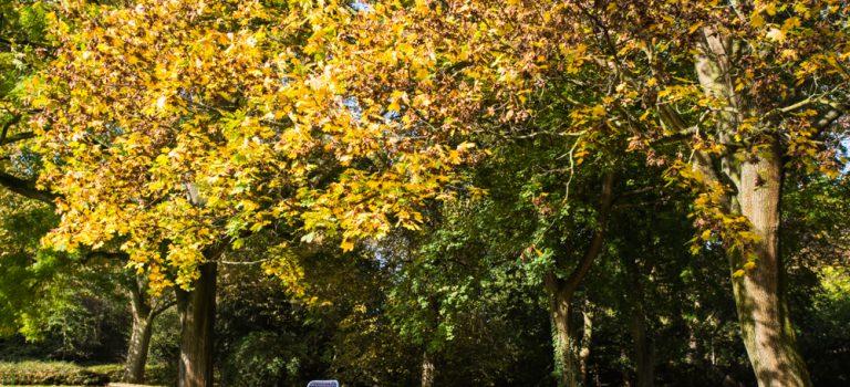 Erfolg beginnt im Kopf – ein Herbstspaziergang mit Rückenwind